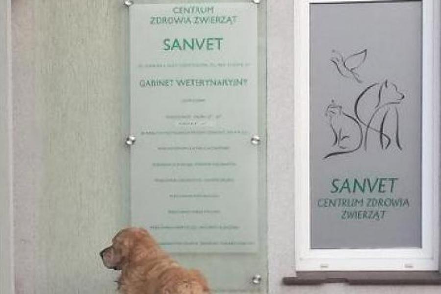 Sanvet Centrum Zdrowia Zwierząt